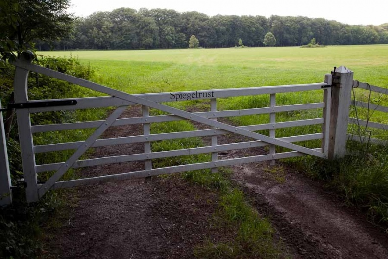 Graveland Spiegelrust 03072011 ASP 01