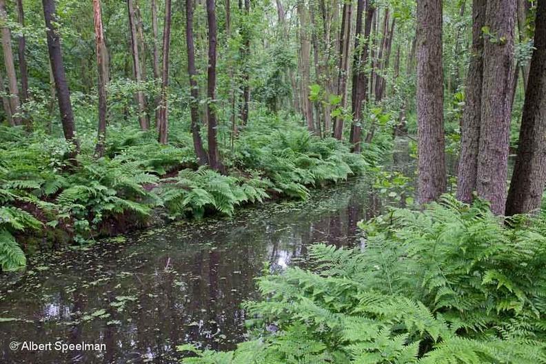 Noordwijkerhout KleinLeeuwenhorst 2012 ASP 03