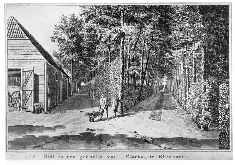 Vrouwenpolder Elsenoort - sterrenbos - tekening Jan Arends 1771 - HET01