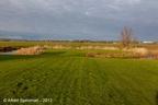 Adorp Harsens Nw 2013 ASP 06
