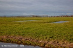 Adorp Harsens Oud 2013 ASP 02