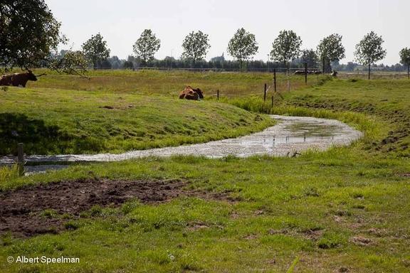 Schoonhoven Zevender 2012 ASP 08