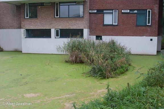 Leiden Paddenpoel 2006 ASP 02