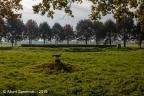 Schalkwijk Marckenburg 2019 ASP 03