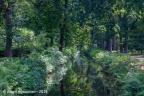 sGraveland SchaepEnBurgh 2019 ASP 05