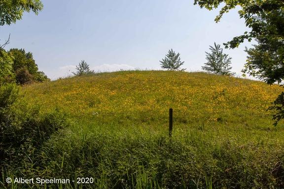 Gapinge Schellachseweg 2020 ASP 08