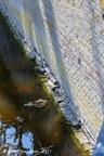SintMaartensdijk Kasteel 2011 ASP 03