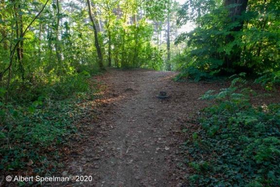 Scharrachbergheim Motte 2020 ASP 08